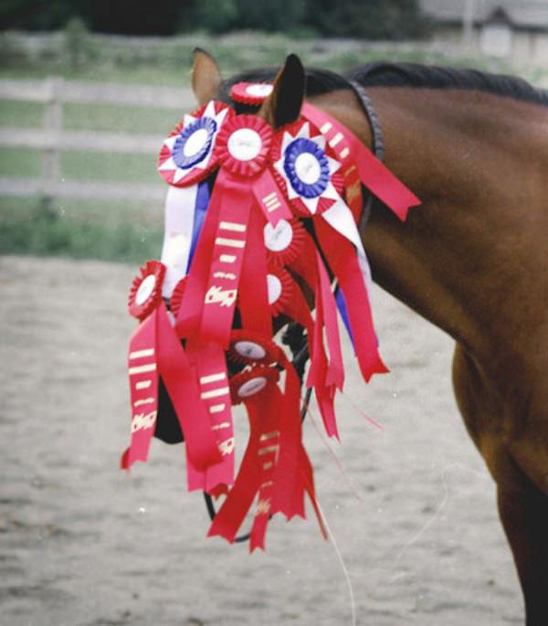 caballo-ganador